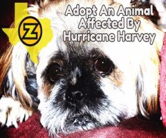 ADOPT AN ANIMAL AFFECTED BY HURRICANE HARVEY!
